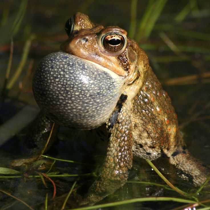 1000+ Images About Reptiles & Amphibions On Pinterest