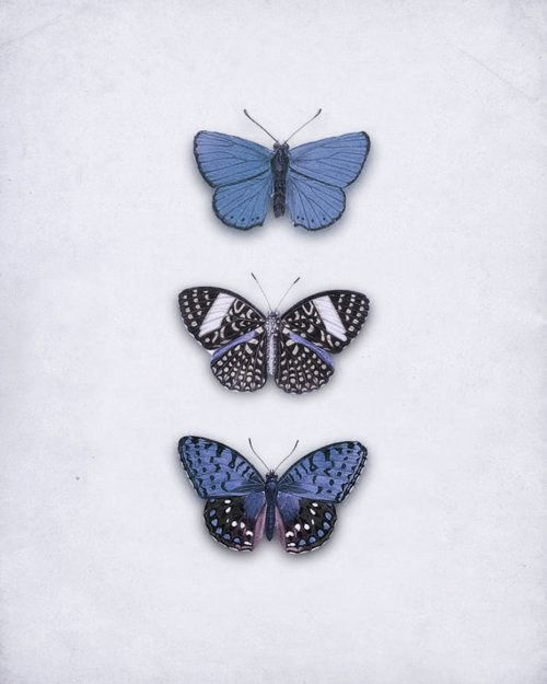 Buterflies in blue