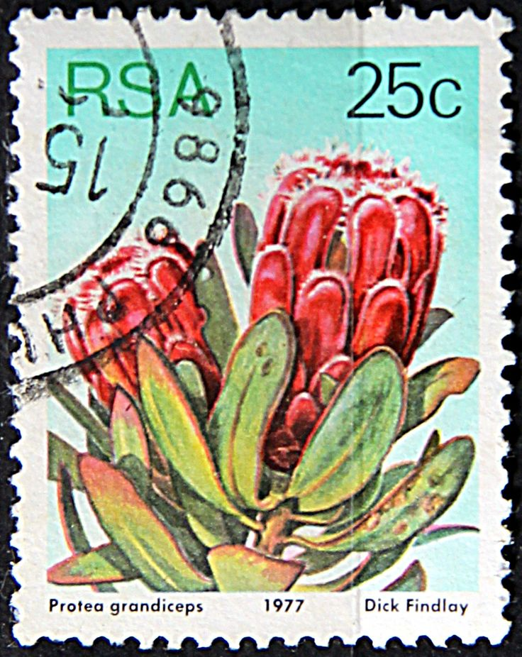 Republic of South Africa. PROTEA GRANDICEPS. Scott 487 A191, Issued 1977 May 27, Lithogravured, Perf. 12 1/2, 25c.