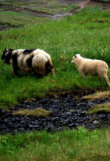 Hiking in Reykjadalur geothermal valley in #Iceland. #travel #hiking #animals