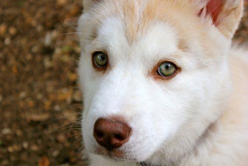 500x334 px | Dog Colors - Eyes | Pinterest | Green eyes ...