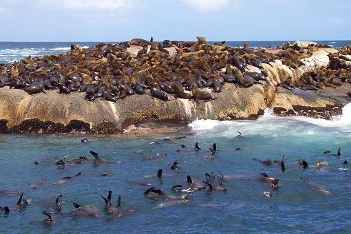 Hout Bay Seal Island Trip