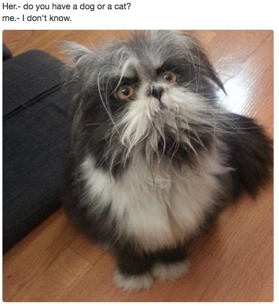 This magical creature. | Just 19 Really, Really Cute Pictures Of Cats