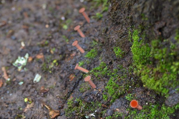How to Kill Trees With Copper Nails | eHow