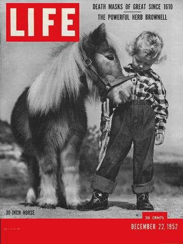 "Life Magazine, December 22, 1952 - Midget horse - Visit  http://oldlifemagazines.com/the-1950s/1952/december-22-1952-life-magazine.html to purchase this issue of Life Magazine. Enter ""pinterest"" at checkout for a 12% discount."