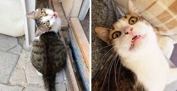 Kitten Showed Up At Hotel Then Found Someone He Loved 3 Years