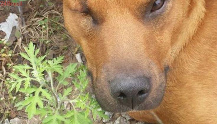 Cachorro cego de um olho precisa de resgate em São Paulo