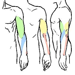 腕まわり 腕の動き方 | KITAJIMAのお絵かき研究所
