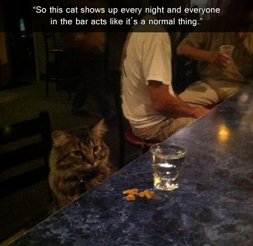 George, Cat At Bar, Is A Regular In Grand Junction, Colorado From Huff Post Comedy, 1 March 2014 If this cat drinks to forget, well, what does a cat forget anyway? Reddit user Bathsaltrocker69 posted this Imgur photo of George, writing that the cat sat at a Grand Junction, Colo., bar every night with his treats and pick-me-up when Bathsaltrocker69 performed there. The image made it happy hour for humorists on both Imgur and Reddit.