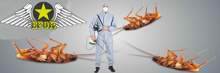 En Etkili Hamam Böceği İlaçlama