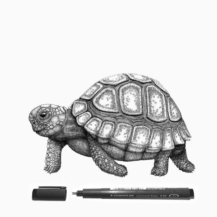tortoise drawing for pinterest - photo #11