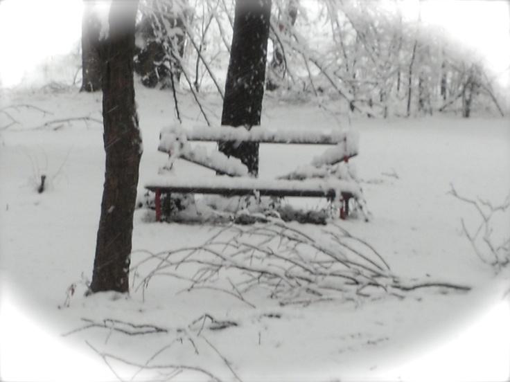 park bench dreamin'