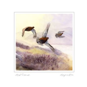 Red Grouse flying card by Roger Lee