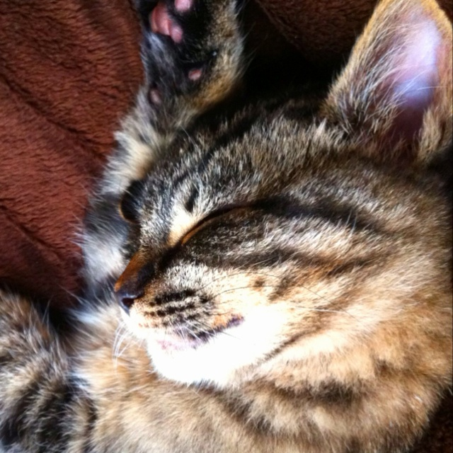 Sleepy frankie baby ) Baby animals, Animals, Cats