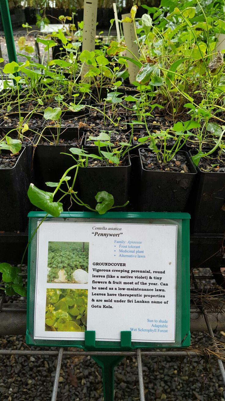 1000 Ideas About Plant Labels On Pinterest Garden