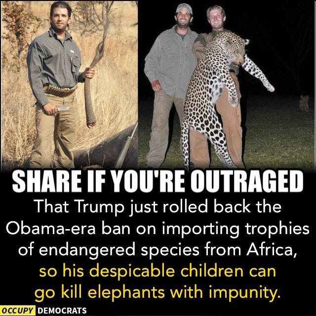 Support A Continued Ban on Elephant Hunting Trophies Here!  https://e-activist.com/page/16468/action/1