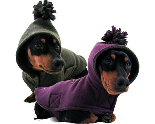 Keep your dogs warm!!!  Hmmmm...........I think I could make one of these for my little Lucy.