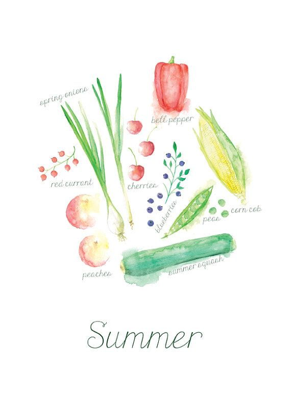 DER SOMMER IN OBST UND GEMÜSE | Englisch  Eine wunderschöne Illustration von saisonalem Obst und Gemüse im Sommer in Englisch. Ein schönes Geschenk für alle Liebhaber der saisonalen Produkte, ideal für die Küche!