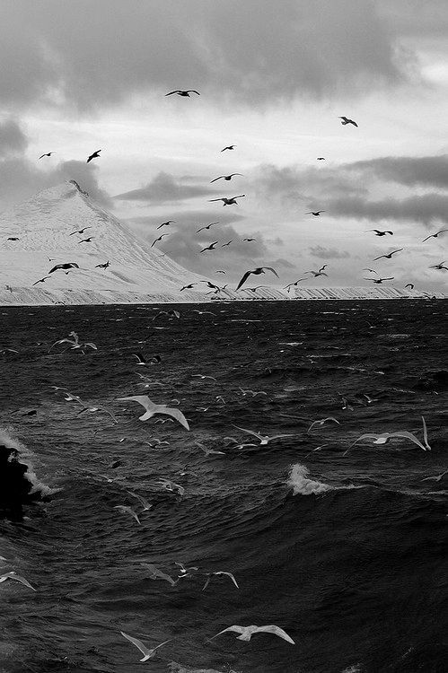 seaguls | storm | ocean