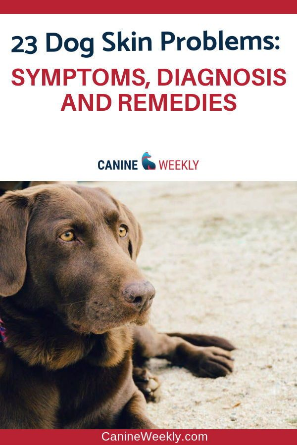 23 Dog Skin Conditions Symptoms Diagnosis And Remedies Skin