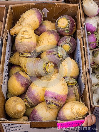 Organic Rutabaga - Download From Over 56 Million High Quality Stock Photos, Images, Vectors. Sign up for FREE today. Image: 38555863