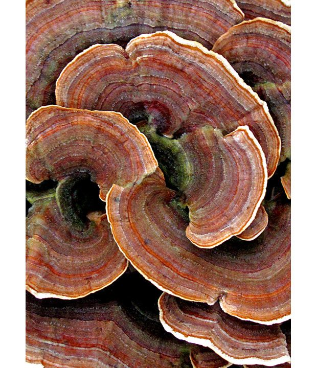 Fungi by Warren Krupsaw, telegraph.co.uk #Photography #Fungus