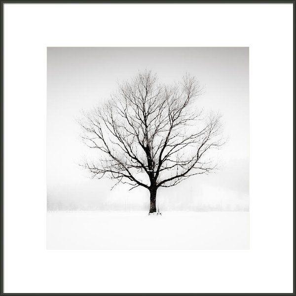 "XXL Tree Art Print. 24x24"" (framed 35x35"") Solitude. Framed Print By Lynne Douglas on Fine Art America - comes on canvas too! #minimalhome #neutraldecor #tree #minimalistdesign"