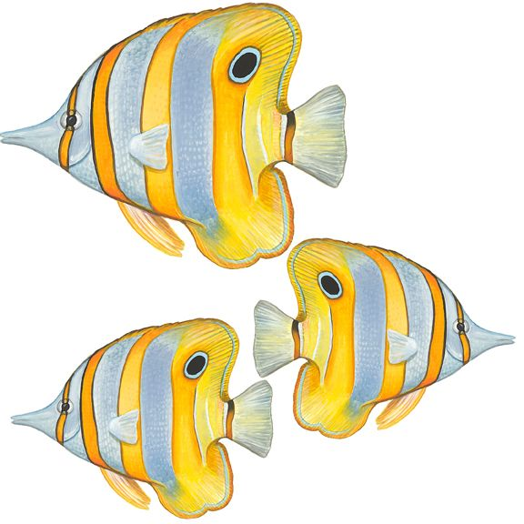 Tropical Fish Wall Decals, Angelfish - Home and Wall Decor