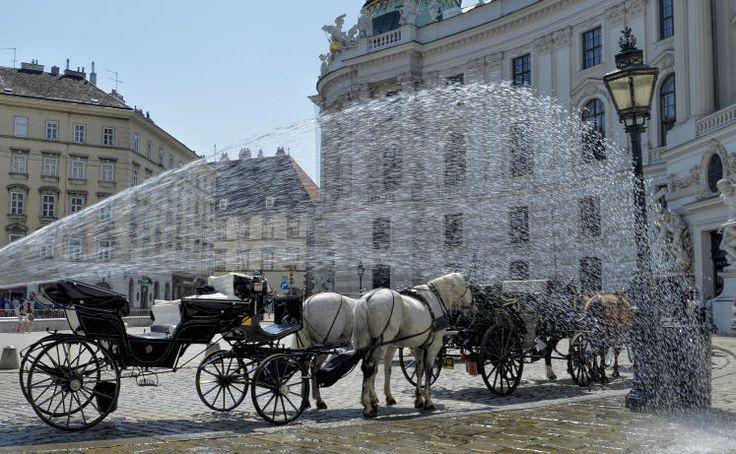 Abkühlung: Auch Fiaker-Pferde in Wien brauchen bei dieser Hitze ab und zu eine kalte Dusche. Mehr Bilder des Tages auf: http://www.nachrichten.at/nachrichten/bilder_des_tages/ (Bild: APA)