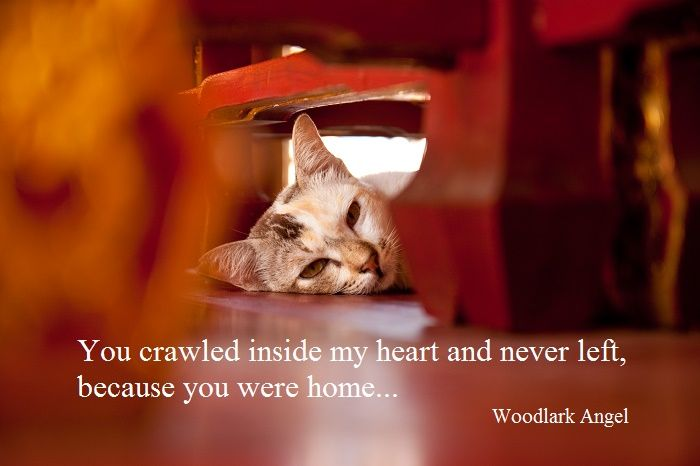Love; Heart; Home; Cat; Poetry; Woodlark Angel
