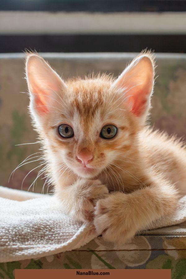 31 Extraordinary Pictures Of Baby Kittens Kitten Care Baby Kittens Newborn Kittens