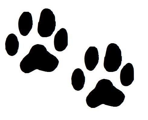 Koiran Jälki