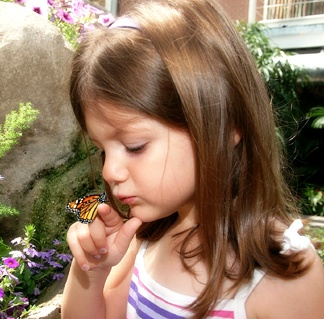 spring and summer butterfly exhibit at the Indianapolis Zoo