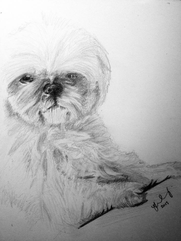 Loyal Dog Drawings