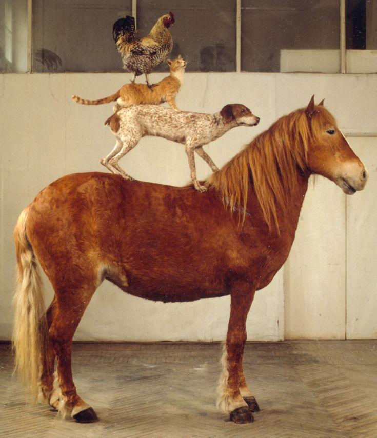 katarzyna kozyra pyramid of animals - Căutare Google