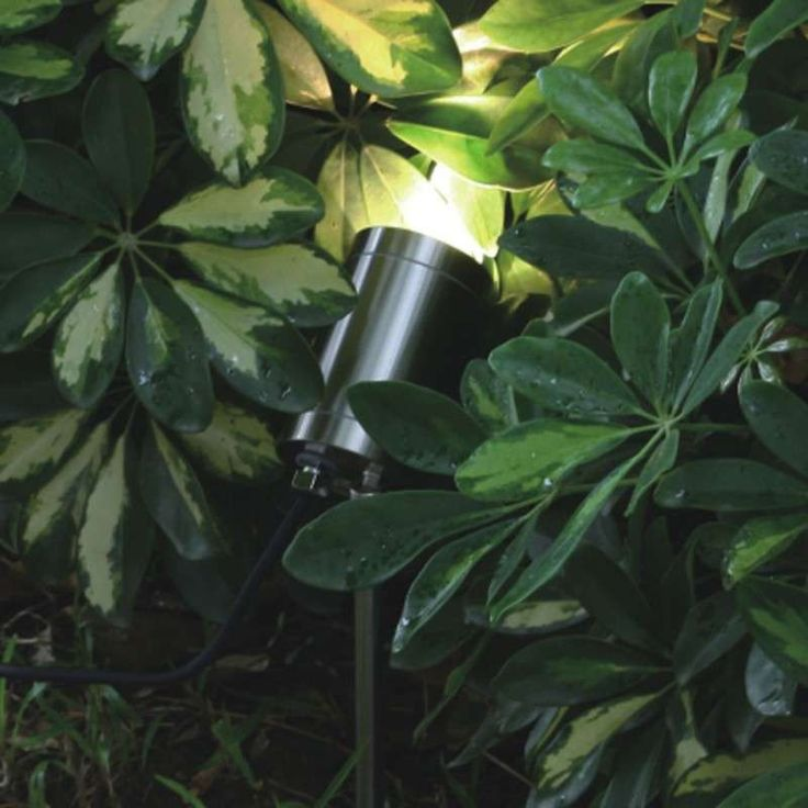Spike Spotlight Solo - Stainless Steel