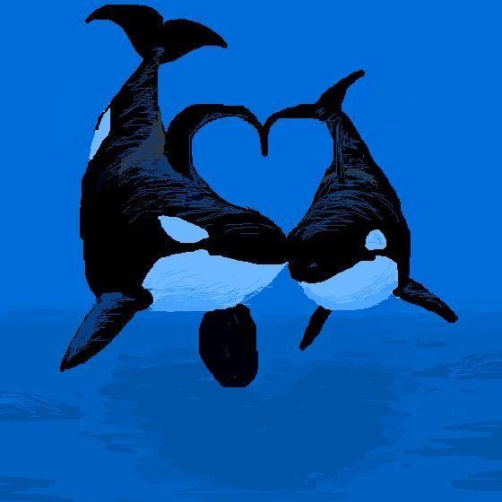 cute orca art