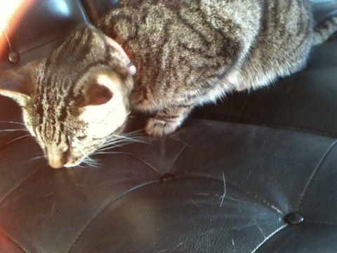 Min kat Oskar