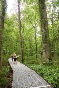 Big Oak Tree State Park East Prairie, MO