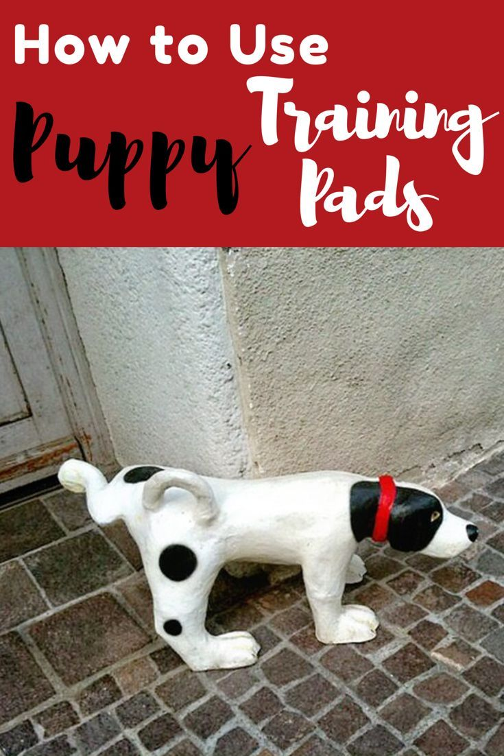 Best Puppy Training Pads for Housebreaking (and the Un-Housebroken!) Potty training a puppy can be a challenge. Learn tips on how to use pee mats to make it easier.