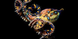 Image result for blue ring octopus tentacle