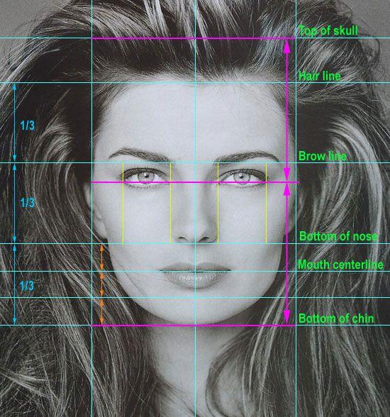 facial proportions - Google-søk