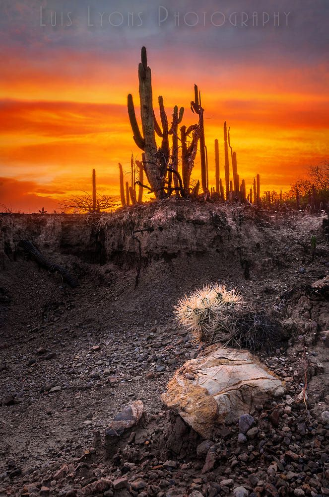 Tencholote Sunset by Luis Lyons #desert #mexico #Tencholote