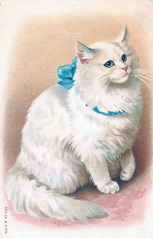 Открытки кошки белые, смешные анекдоты