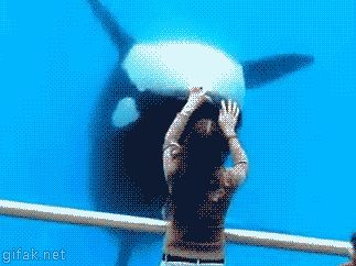"""Not such a killer whale more a wouldn't hurt a fly whale !! Well being underwater wouldn't do the poor fly any favours though """" waiter there's a fly in my pool """"  """" Well don't tell all the other whales, they will ALL WANT ONE !! """""""