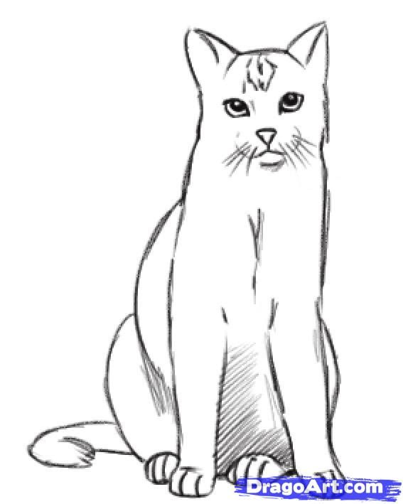 How to Draw a Realistic Cat Step by Step -Hundreds of drawing tuts on this site
