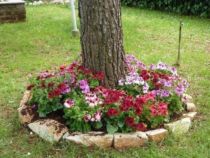 17 migliori idee su piantare un giardino su pinterest for Albero per piccolo giardino