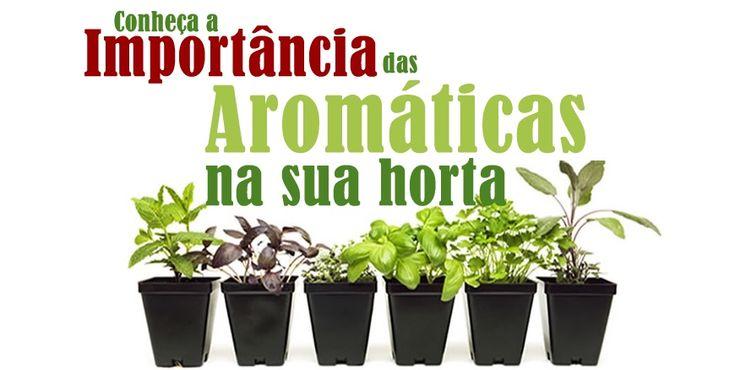 Aprenda como cultivar e usar as ervas aromáticas na sua horta.