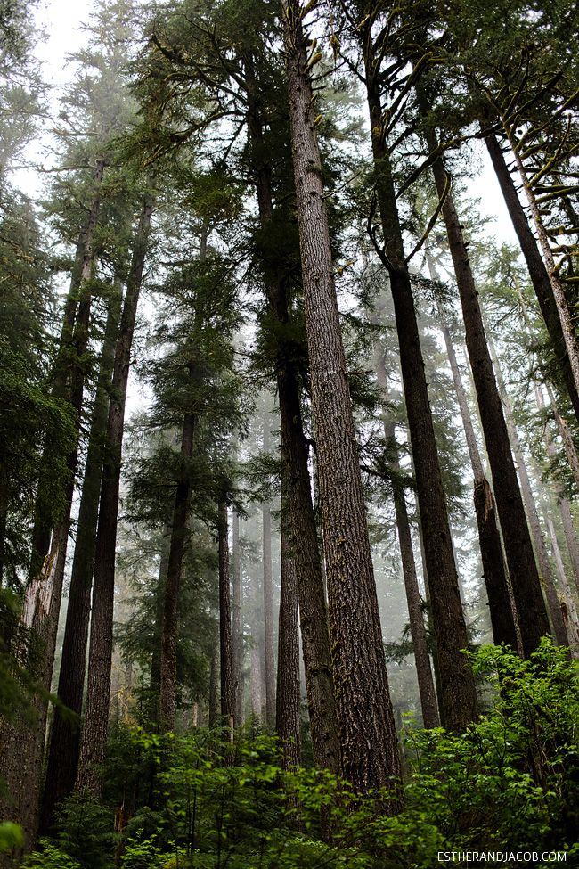 Olympic National Forest