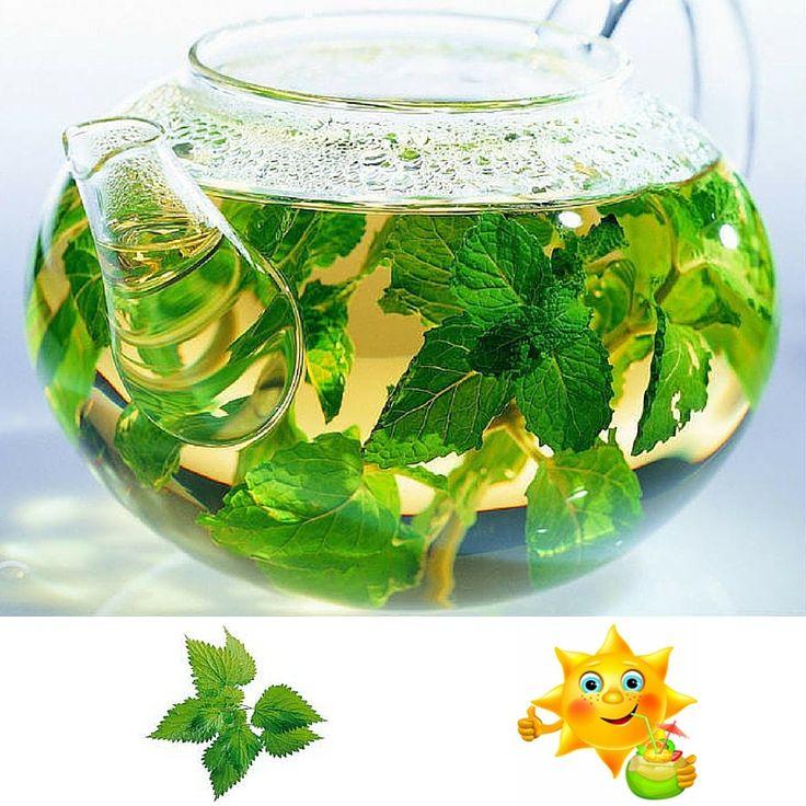 Ceaiul de urzică este foarte potrivit pentru a combate astenia de primăvară. Acesta vitaminizează, detoxifică şi mineralizează organismului. .  Poate fi utilizat şi pentru a lupta împotriva mătreţii şi tonifiază firele de păr. În acest sens vă recomandăm şamponul cu urzică pentru toate tipurile de păr în format familial de 1 L de la Douce Nature: http://www.organik.ro/cosmetice-naturale-par/sampon/sampon-cu-urzica-pentru-toate-tipurile-de-par-format-familial-1l-douce-nature